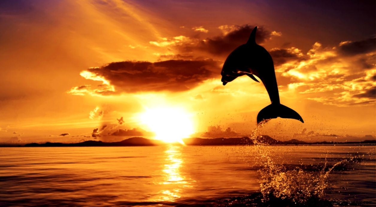 Dolphin Sunset Wallpaper | Wallpapers Gallery