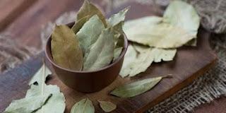 cara mengusir tikus dengan daun salam