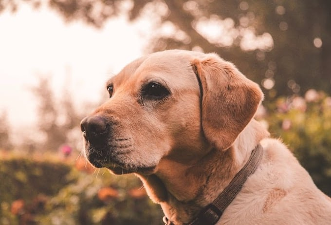 15 Useful Tips on How to Care for a Senior Dog