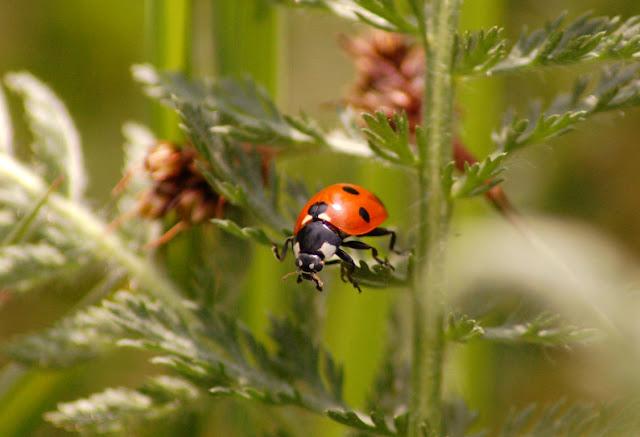 Seguridad alimentaria, control biológico de plagas, plagas, agricultura, cultivos