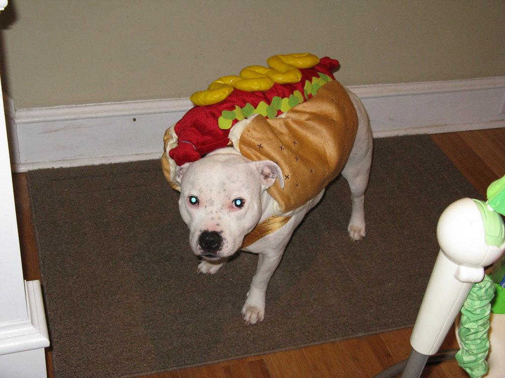 Nathan For You Hot Dog Costume