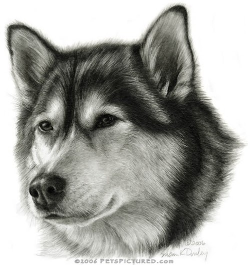 05-Alaskan-Malamute-Susan-Donley-Cats-and-Dogs-Featured-in-Pencil-Portraits-www-designstack-co