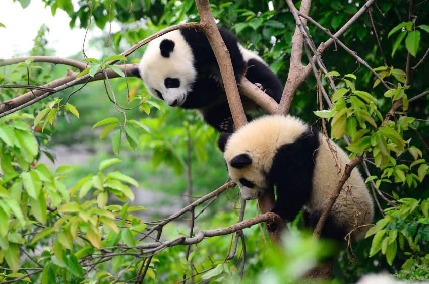 Living Planet Index: La Terra ha perso il 60% dei suoi animali selvaggi in meno di 50 anni.
