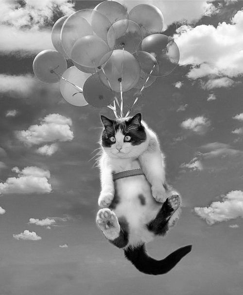 Floating balloon cat funny picture