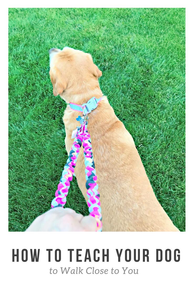 How Do I Train My Dog To Walk To Heel