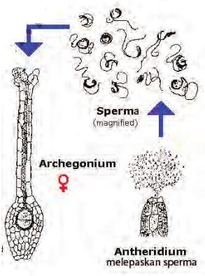Gambar Kemotropisme : gambar, kemotropisme, Macam, Gerak, Tumbuhan