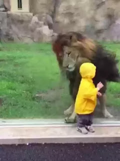 Lion pounces on boy aged two at zoo in Japan