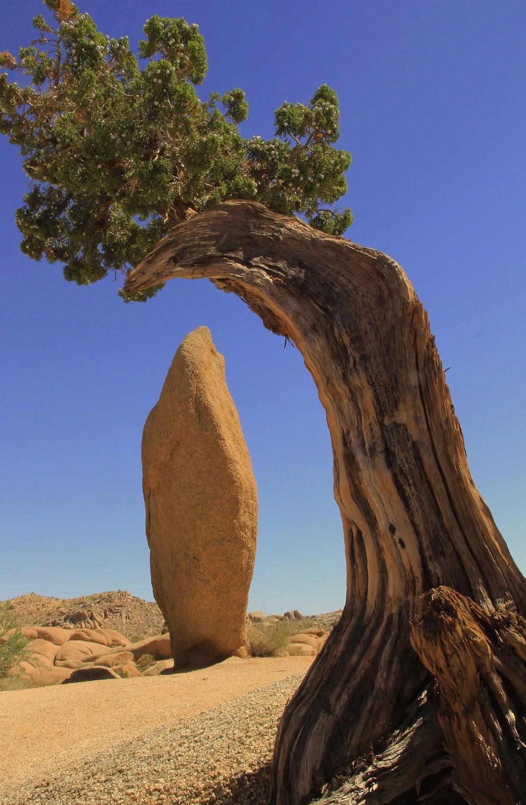 Joshua Tree National Monument, CA