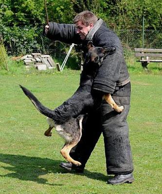 Training van politiehonden