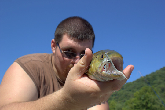 Caney Fork River brown trout head shot