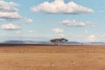 Parque natural del Masái Mara