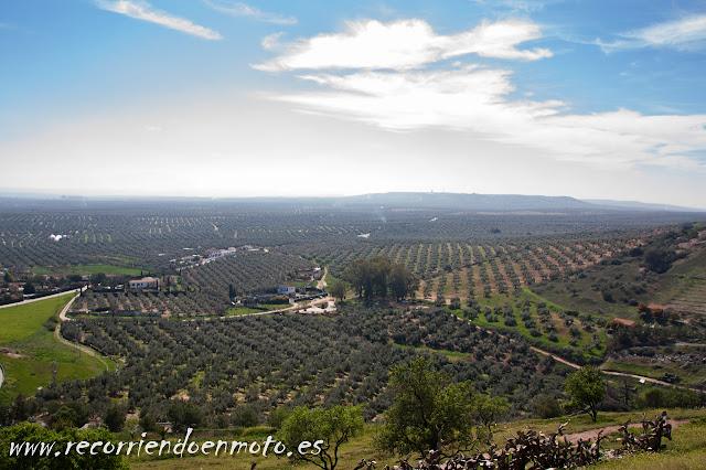 olivar en Baños de la Encina, Jaen