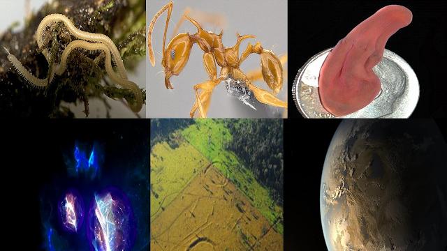 إكتشاف علمي,إكتشافت علمية,2017,علوم,قارة ثامنة