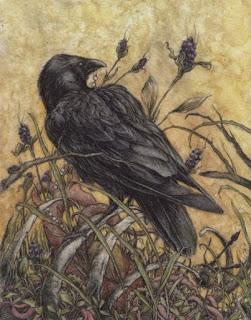 A crow by Arthur Rackham
