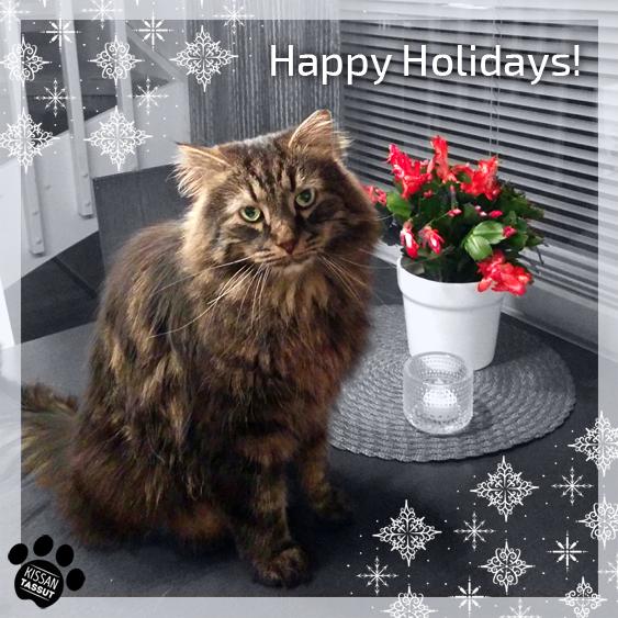 Kissa istuu pöydällä ja katsoo kameraan, taustalla joulukaktus ja ympärillä lumihiutaleiden kuvia.