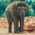 Photos/Video: 7-year-old girl visting a Zoo dies after Elephant hurls a huge stone at her head