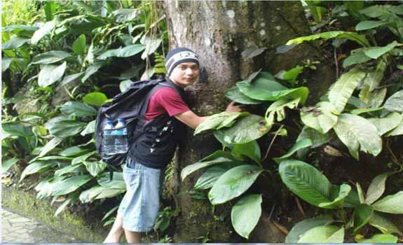 10 Manfaat Menanam Pohon Bagi Kehidupan Makhluk Hidup