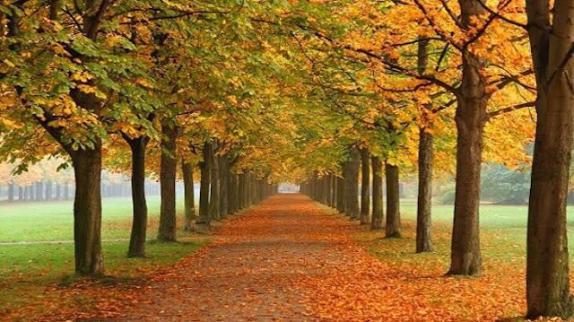 وصف الطبيعة في فصل الخريف