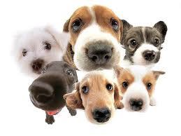 Pinnacle Hypoallergenic Dog Food