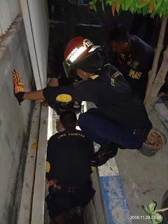 Penyelamatan Seokor Kucing Di Surabaya