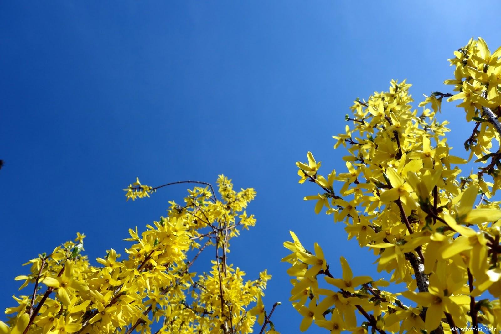 unterfrankes welt fr hlingshimmel gelb und blau. Black Bedroom Furniture Sets. Home Design Ideas