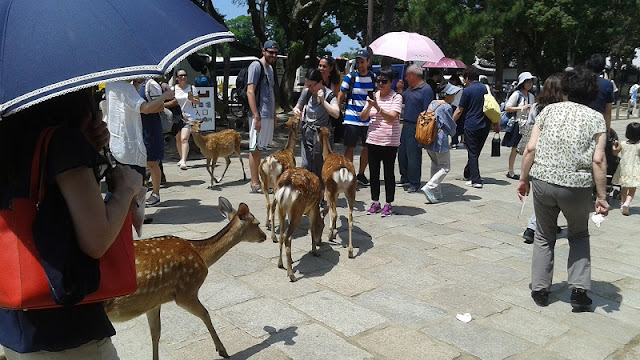 Ciervos entre los turistas
