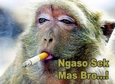 foto monyet merokok lucu