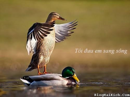 Ảnh chế vui về chim