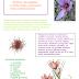 Budowa i rozmnażanie kwiatów. Krokus czyli szafran- budowa, historia, zastosowanie