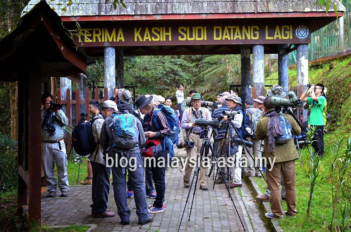 International birders in Malaysia