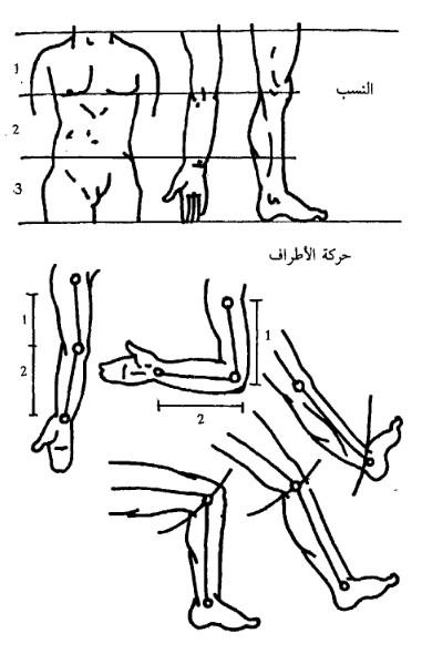 النسب في جسم الانسان