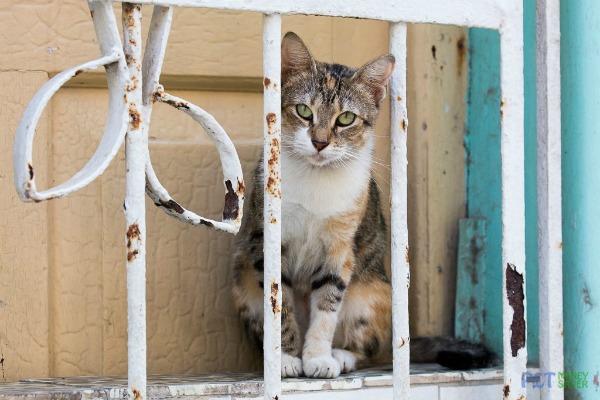 Havana window cat