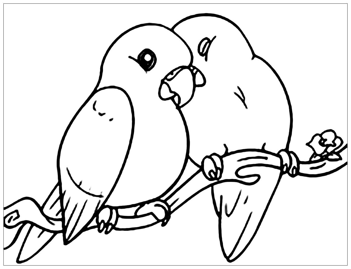 Tranh tô màu hai con chim