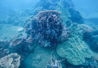 Submarinismo en la isla de Phu Quoc