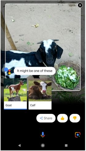 Google Lens analyzing the animal
