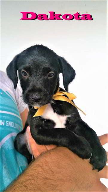 cachorra tamaño pequeño