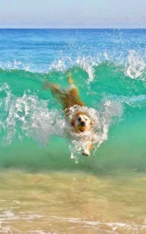 Dog-Swimming-At-Beach