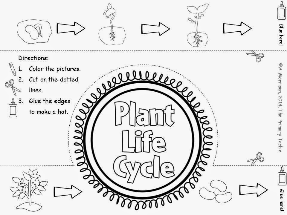 The Primary Techie: Plants, First Grade Time Lapse