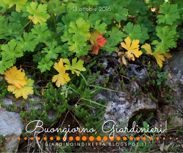 geranium × cantabrigiense 'biokovo' - l'agenda del giardino e del giardiniere - un giardino in diretta