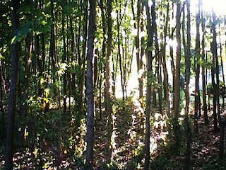 Arboreto Cicchetti