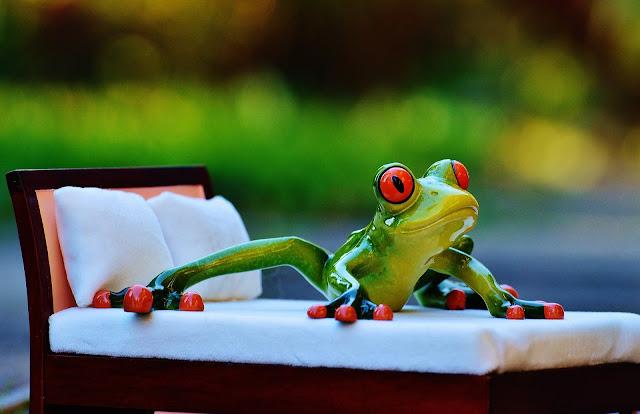 Frog Awake in Bed