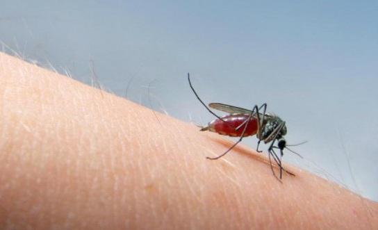 Cara mengusir nyamuk dengan cepat dan ampuh