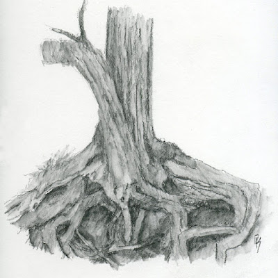 art sketch life graphite plein air tree trunk roots