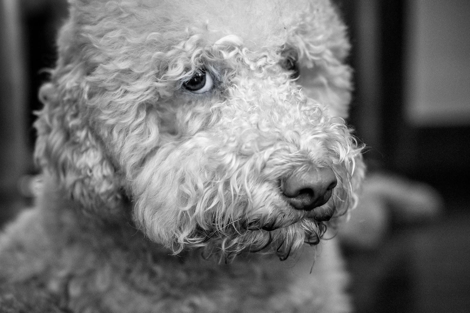 liquido prostatico cane normale