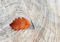 Una foglia su legno simbolo di spiritualità, preghiera, vocazione, vangelo.