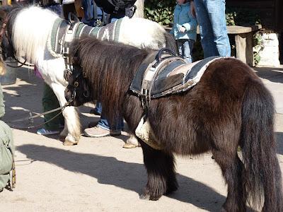 Pony, Ponyhof, Reiterhof, Niendorfer Gehege, gesatteltes Pony