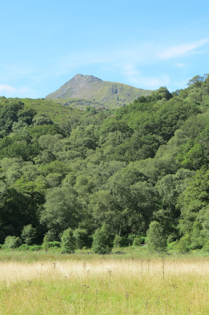 Across a meadow, thick woodland and above it the pointed summit of Moel Siabod.