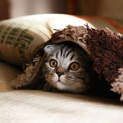 Nocturnal Cat behaviour