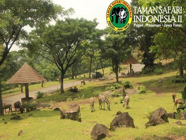 Harga Tiket Masuk Taman Safari Prigen Terbaru 2018 Daftar Harga