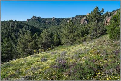Parque Natural De Los Pinares De Rodeno (Albarracín)